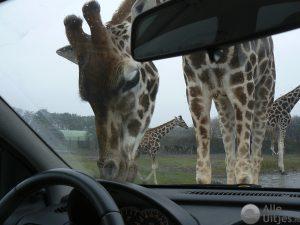 Safaripark Beekse Bergen