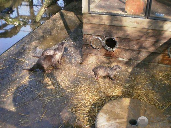 De Paay Uilen en Dierenpark